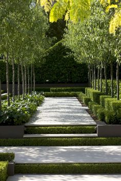 Peter Fudge Gardens have created a severely disciplined garden, based on formal geometric principles and evoking French formal gardens. Modern Landscaping, Backyard Landscaping, Landscaping Ideas, Formal Gardens, Outdoor Gardens, Landscape Architecture, Landscape Design, Canada Landscape, Path Design