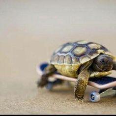 Turtle --- 興趣圖譜 Hobby Couple