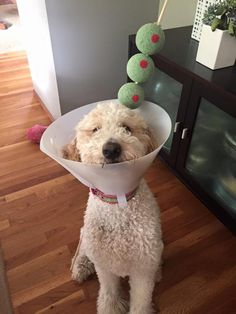 The best Halloween costume Ive seen: the Dogtini.