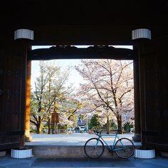 【hiroyukitanakaa】さんのInstagramをピンしています。 《真如堂の桜🌸 一番よく行ったお寺かも🚲 空いてるし、景色も良いし、アフロ地蔵もいてるし、紅葉も綺麗なよい寺です✨✨ 今年こそは除夜の鐘つきにいこかな💨💨 一年を振り返り中📷 #真如堂 #桜 #kyoto #japan_daytime_view  #VSCOGoodShot #IGersJP #icu_japan #art_of_japan_ #jp_gallery_member #team_jp_西(京都) #wu_japan #Far_EastPhotoGraphy #Lovers_Nippon #bestjapanpics  #loves_bikes #tokyocameraclub  #surlybikes #japan_of_insta #whim_life  #ptk_japan  #phos_japan #wp_japan  #自転車と京都 #京都 #風景 #自転車 #ぶらり京都撮影部 #奥行き同盟 #ポタリング》