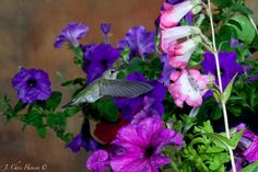 Chris The Photog: Nature Photography