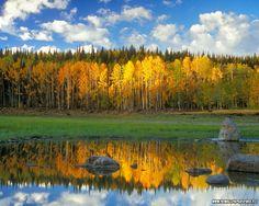 Colorado Grand Mesa in the fall. Gorgeous wedding venue ideas | Stories by Joseph Radhik