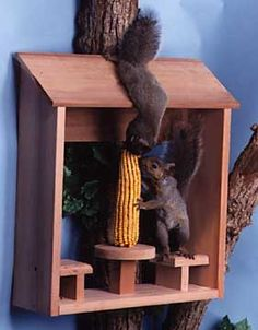 Squirrel Feeders, Quality Squirrel Feeders For Feeding Backyard Squirrels…
