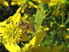 The Dangers of Over-harvesting Honey