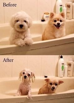 silly but so cute! before: fluffy  after: a drowned puppy all right!