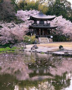 ☆京都|勧修寺 Kaju-ji Temple . 氷室池に映る、観音堂と桜🌸🌸🌸 . #リフレクション . #kajuji #japan #kyoto #Instagramjapan… | 京都🌸禅寺(@zen_temples)