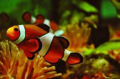 Ayúdanos a proteger las aguas profundas