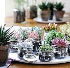 La belleza de las plantas suculentas