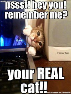 Real cat