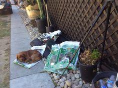 Vert garden dirt fill assistant