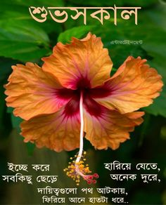 Good Morning Happy, Good Morning Photos, Lord Krishna, Osho, Bangla Quotes, Christmas Ornaments, Wallpaper, Gallery, Plants