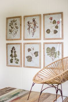 Set of 6 Leaf Prints Under Glass