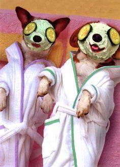 Dogs On Spa Parlor.. Lolsx