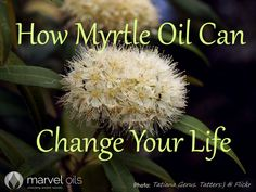 There's an old saying that you learn something new every day – Marvel Oils are so, well, marvellous, that there is always something more to learn. Here's one that slipped under even our radar – Myrtle Oil. This is an ancient oil which has some fantastic properties so we don't know how we missed it. To remedy that, I present Myrtle, or Lemon Myrtle Oil.