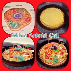 Edible Animal Cell science project. Sugar cookie dough, candy, marshmallow creme, and frosting.