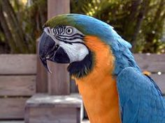Periwinkle Park We feature many species of exotic and native birds including toucans and macaws, plus our brown & ringtail lemurs add a mix to our aviary.