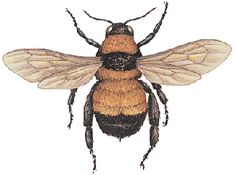 I could definitely see this Bumblebee as a tattoo