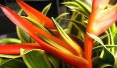Arranjo floral: Um Ikebana para seu dia de festa! Decorar a casa é uma tarefa…
