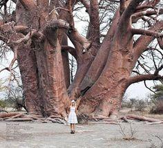Seriously BIG tree
