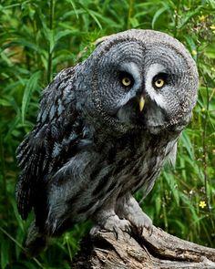 Dich kenn ich doch ! :-)) - Tiere | VIEW Fotocommunity