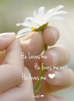 """Daisies, quote"""" He loves me, he loves me not, he loves me!. Please also visit www.JustForYouPropheticArt.com for colorful inspirational Prophetic Art and stories. Thank you so much! Blessings!"""