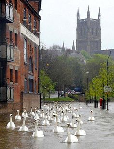 Floods are interesting in England