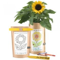 Our Green House has a wide collection of organic and eco-friendly gifts for kids! This garden-in-a-bag sunflower kit will be a hit at birthday parties or in an Easter basket! Dwarf Sunflowers, Pink Rims, Craft Packaging, Sunflower Garden, Childrens Gifts, Garden Gifts, Kids Bags, Sustainable Design, Corporate Gifts