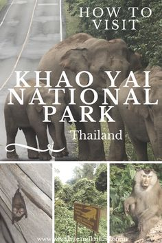 Reise, Unterkunft und Touren in Khao Yai Nationalpark, Thailand - Thailand Adventure, Thailand Travel Tips, Visit Thailand, Asia Travel, Adventure Travel, Koh Phangan, Pattaya, Phuket, Khao Yai National Park