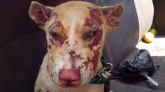 Mexico - Please Educate on Compassion especially your children.  Without their lives and many around them will be horrific. Justice for Naty, boiled in hot water for laughs in Mexico! | YouSignAnimals.org