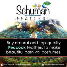 Celebrate #Carnivals in this New Year with #Feathers http://www.schumanfeathers.com/blog/celebrate-carnivals-new-year-feathers/