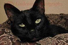 Black Cat - Handmade Notecard by Lindentreephotograph on Etsy