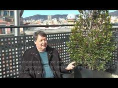 Entrevista a Denis Thériault, autor de 'El cartero de los Haikus' (Umbriel) - YouTube