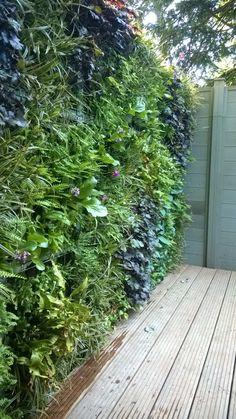 Rustic Gardens, Outdoor Gardens, Garden Care, Ferns Garden, Green Facade, Garden Entrance, Plant Wall, Colorful Garden, Backyard Patio