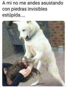 It's not Alt szn yet Karen! Funny Spanish Memes, Spanish Humor, Mundo Meme, Funny Images, Funny Pictures, New Memes, Marvel Memes, Funny Posts, Funny Animals