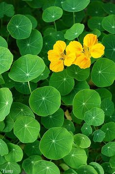 212 best color yellow green images on pinterest green yellow yellow and green mightylinksfo