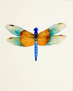 dragonfly watercolor - Google Search