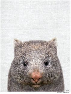 Aussie Animal Print - WILLS the Wombat - Australia Originals Baby Animals, Funny Animals, Cute Animals, Wombat Pictures, Cute Wombat, Funny Animal Clips, Australia Animals, Australia Funny, South Australia