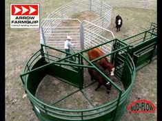 Bud Flow - Cattle Crowding Tub - Cattle Handling Equipment - YouTube