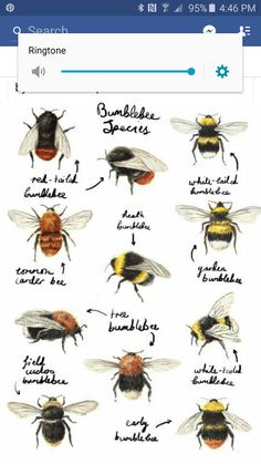 Find out who's buzzing round your garden, and stop killing what you think are wasps, because they are a form of a BEE. Illustration by Catherine Pape by shelby Tatoo Brothers, Funny Bird, Tatoo Bird, I Love Bees, Bee Friendly, Bee Art, Save The Bees, Bees Knees, Bee Keeping