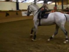 """Very young rider jumping a lovely, careful horse. <3 Precious. """"""""unbelievable!!!! You have see this!!! by www.premiumhorses.de"""""""""""