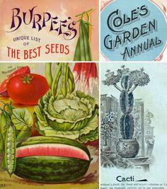 Burpee's Seed Annual
