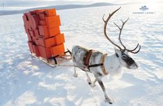 …Excuse me Blitzen, is that Hermes you are carting in that sleigh? I've been a VERY GOOD BOY!!