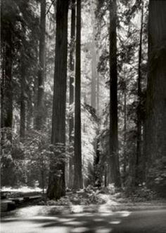 Ansel Adams photo