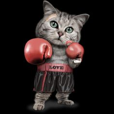 BOXING CAT T-Shirt Design by ADAMLAWLESS - fancy-tshirts.com