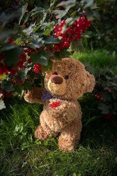 Tatty Teddy, Happy Teddy Day Images, Teddy Hermann, Tedy Bear, Love Bears All Things, Teddy Bear Pictures, Charlie Bears, Bear Party, Teddy Bear Birthday