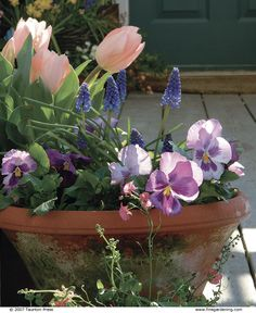 Celebrate Spring with Cool-Season Containers: Brighten up your garden with cold-tolerant plants like 'Apricot Beauty' tulips, grape hyacinths, and 'Delta Lavender-Blue Shades' pansies.  Read more: http://www.finegardening.com/celebrate-spring-cool-season-containers#ixzz42SdJXJzP  Follow us: @finegardening on Twitter | FineGardeningMagazine on Facebook | Fine Gardening