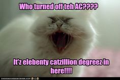 What my cats ask me every summer, except we don't have AC!