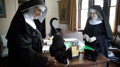 All Saints Sisters of the Poor Baltimore, MD Dominic, the cat