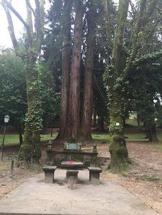 Castelo de Soutomaior, Pontevedra, Galicia Trunks, Plants, Drift Wood, Tree Trunks, Plant, Planets