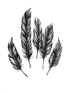 plumas. Feather Drawing, Feather Tattoo Design, Feather Painting, Feather Art, Feather Tattoos, Tattoo Plume, Arm Tattoo, Angel Wings Drawing, Zentangle
